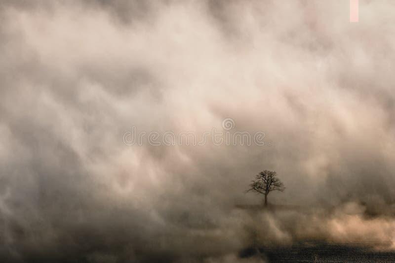 Уединенное дерево в отверстии в тумане раннего утра в холмах Malvern стоковое фото rf