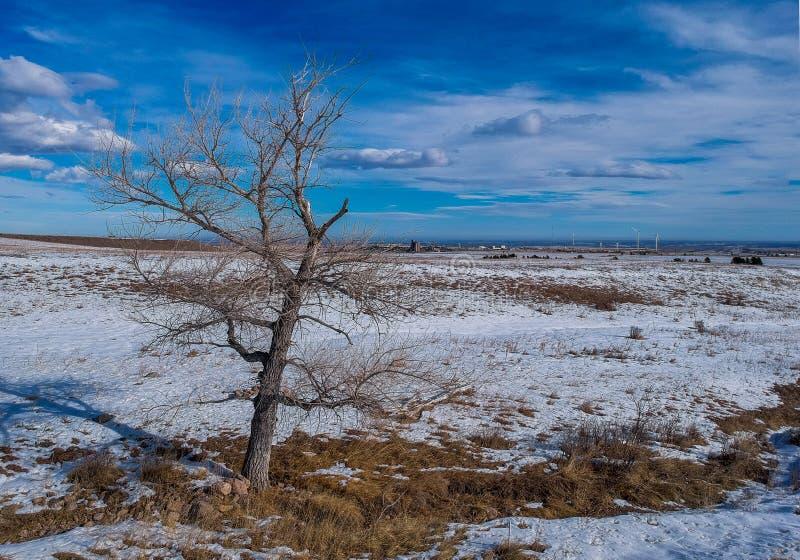 Уединённое дерево в поле снега стоковая фотография