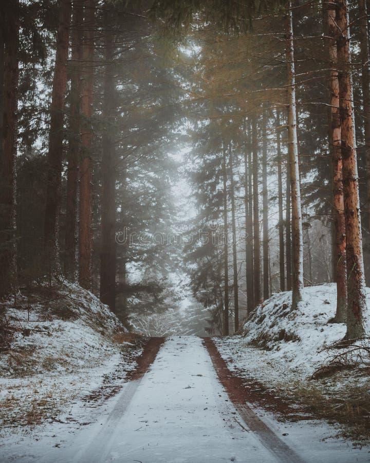 Унылая дорога леса в северной Зеландии, Дании во время wintertime стоковая фотография