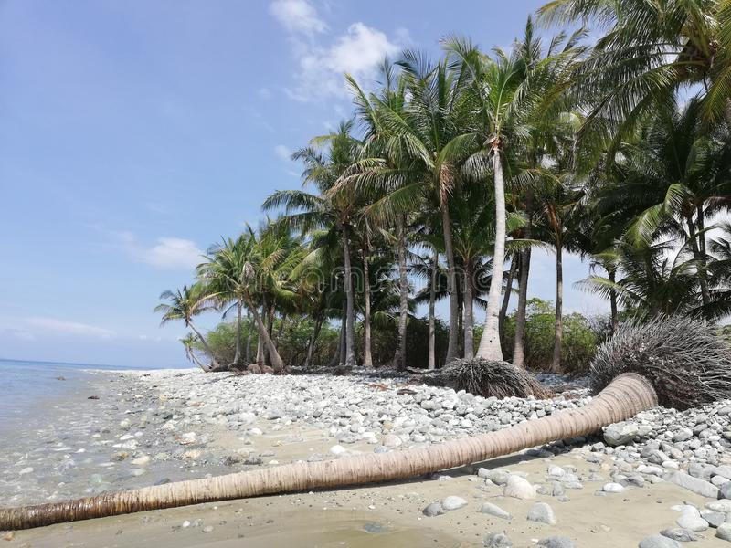 Упаденный хобот пальмы на тропическом pebbly песчаном пляже на Mindoro, Филиппинах стоковое фото rf