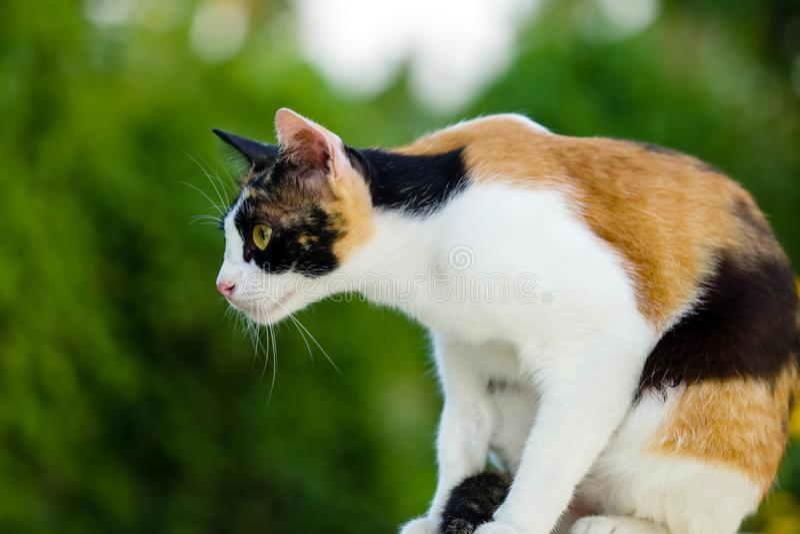Усаживание кота ослабленное на таблице стоковые изображения rf