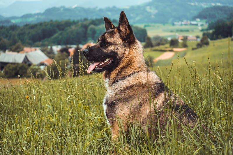 усаживание травы собаки стоковые изображения