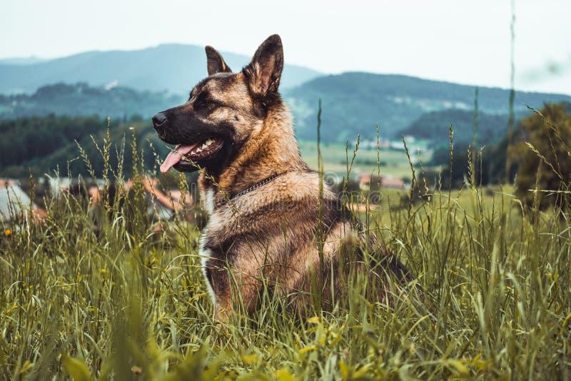 усаживание травы собаки стоковое изображение rf