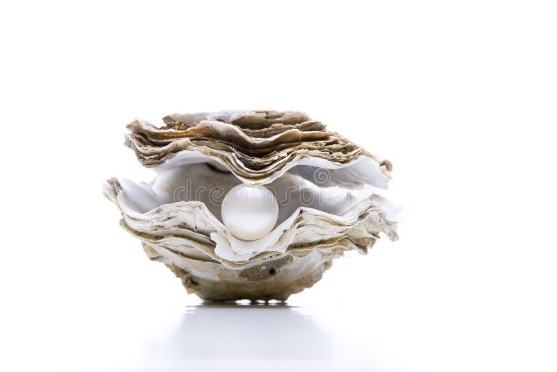 Устрица с жемчугом стоковое фото