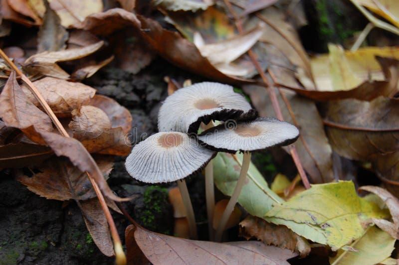 """ у de Ð?Ñ del ¼ Ð?Ð ½ Ð ½ Ð?Ð  Ñ ¾ Ð ² Ð ‹Ñ€Ð¸Ð±Ñ ³ Ре ‹"""" Ñ Ð"""" del ` Ð?Ð de Ð Setas blancas en el bosque del otoño imagenes de archivo"""