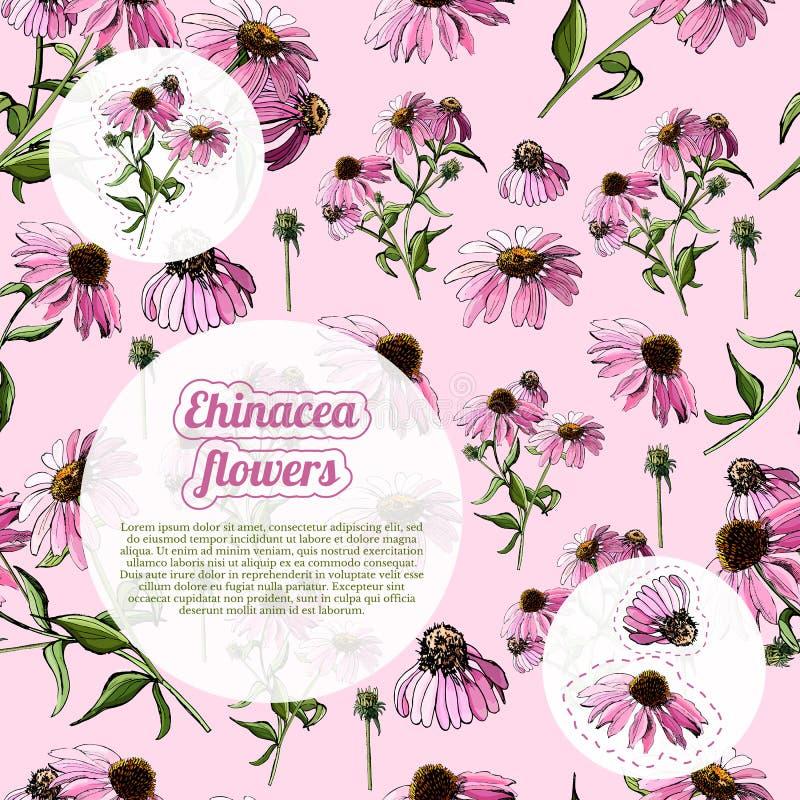 Шаблон с безшовными картиной и стикерами букетов розового цветка эхинацеи Эскиз нарисованный рукой бесплатная иллюстрация