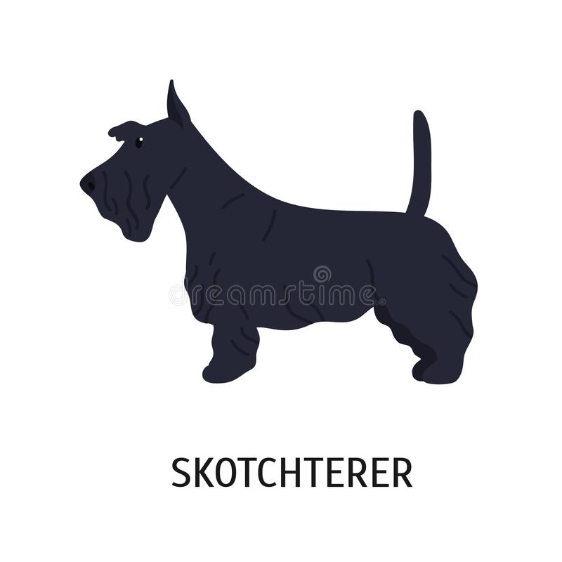 Шотландские терьер или Scottie Прелестная небольшая собака охотиться порода, взгляд со стороны Милое прекрасное маленькое чистопл иллюстрация вектора