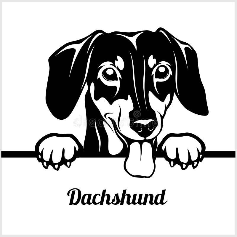Такса - Peeking собаки - - голова стороны породы изолированная на белизне иллюстрация вектора