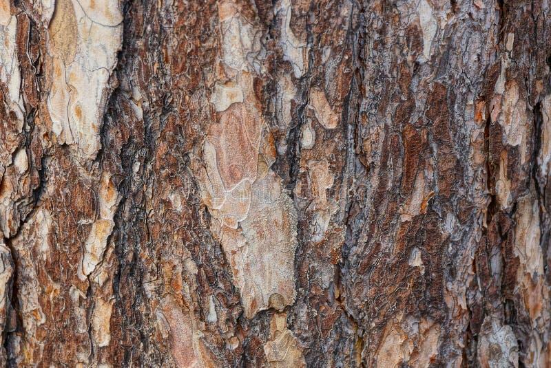 Текстура Брауна деревянная частей коры на сосне стоковое фото