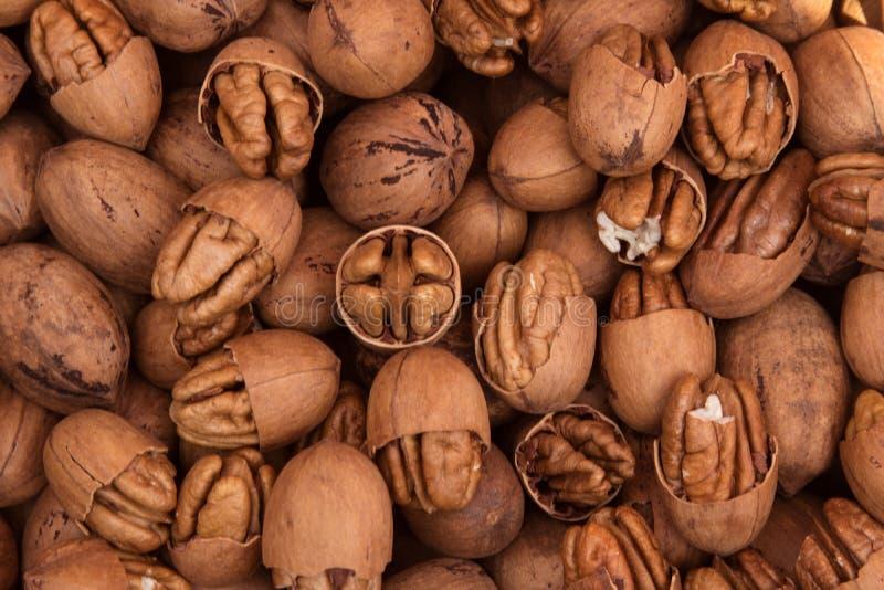 Текстура грецкого ореха с раковиной 2 стоковые фотографии rf