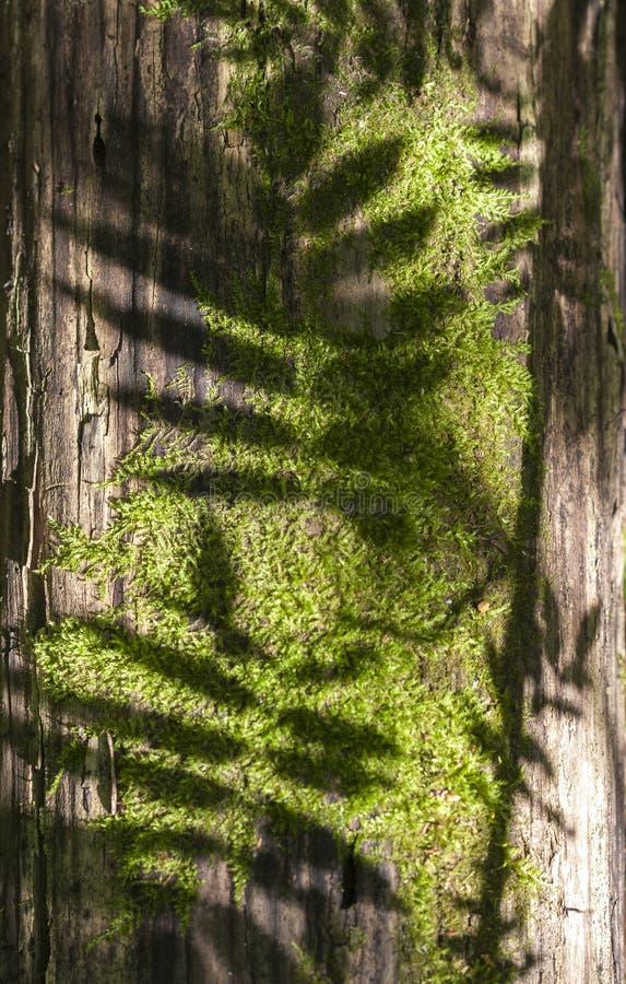 Тень на мхе стоковые изображения
