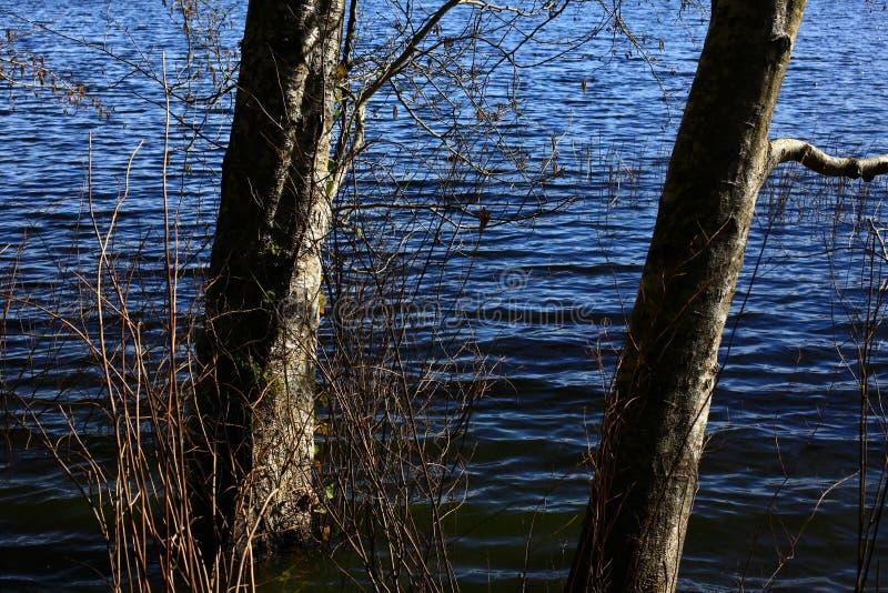 Тихое океан северо-западное озеро леса стоковые изображения