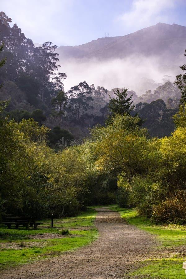 Туманное утро, парк San Pedro Valley County, область San Francisco Bay, Калифорния стоковая фотография rf