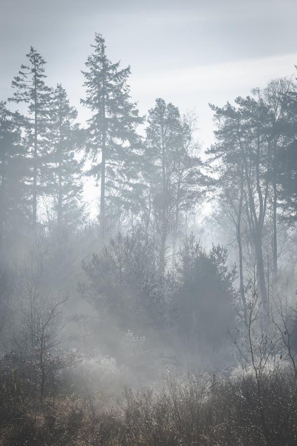 Туманное солнечное утро с освещением солнечного света вверх по земле Силуэты дерева стоковая фотография rf