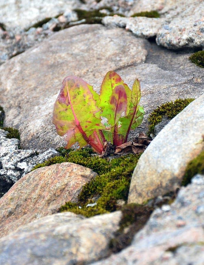 Трава растя на скалистом наклоне стоковые фото