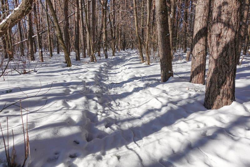 Тропа на снеге во дне леса зимы солнечном зима белизны снежинок предпосылки голубая стоковые фото