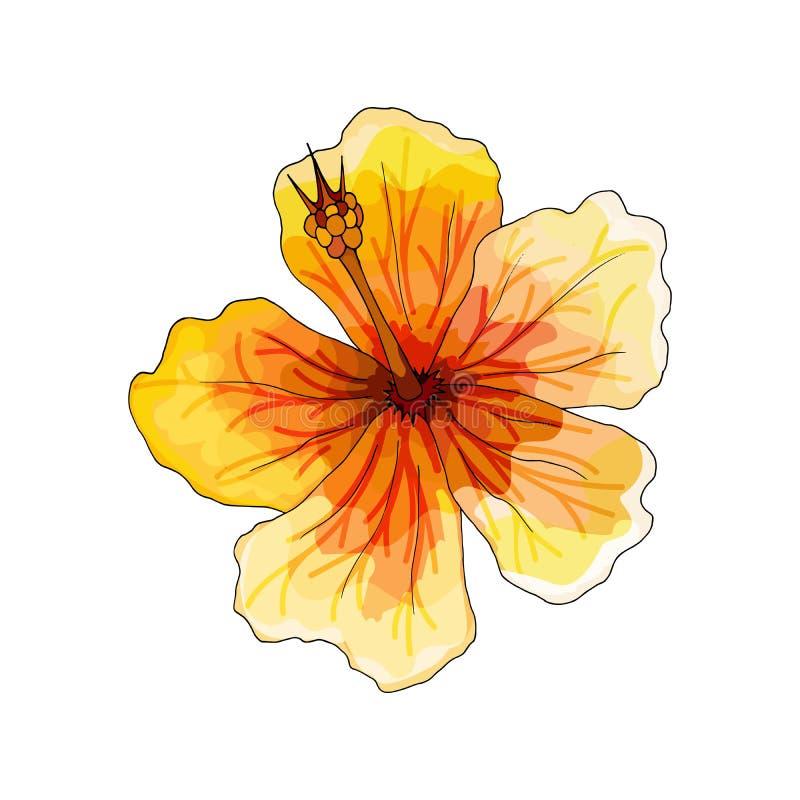 Тропическая орхидея, красный цветок с оранжевыми и желтыми венами на белой предпосылке иллюстрация вектора