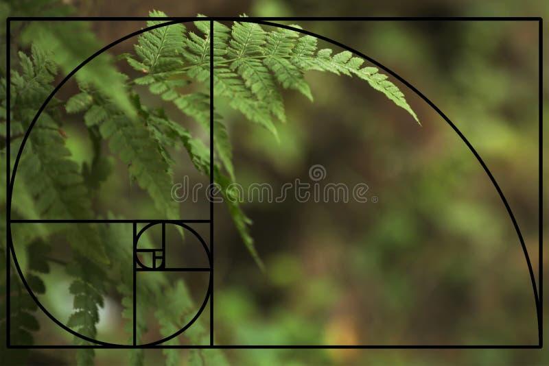 Тропический зеленый папоротник выходит в глушь, крупный план стоковые изображения