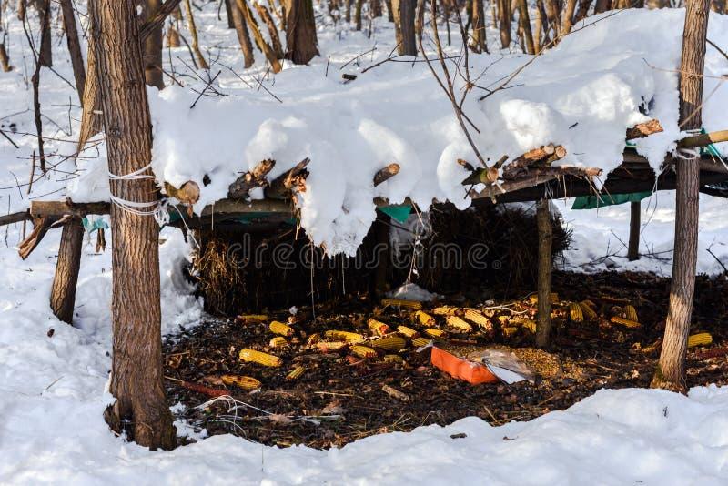 Фидер животных в лесе зимы стоковые фотографии rf
