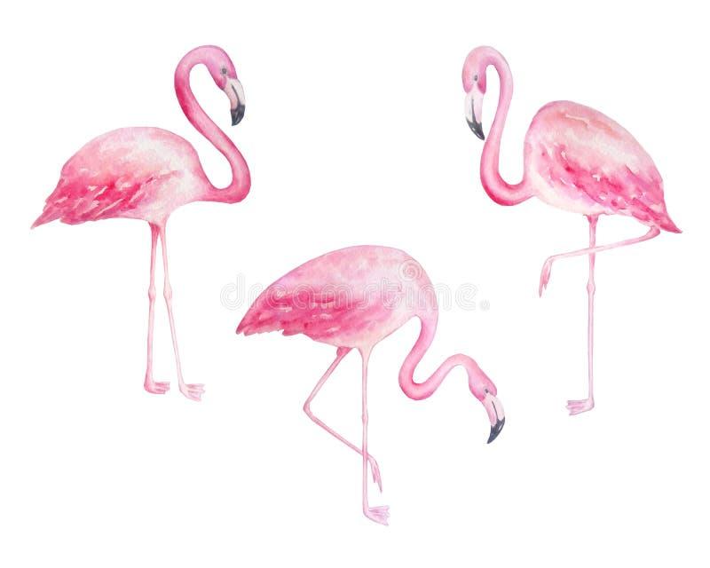 Фламинго акварели 3 розовые иллюстрация штока