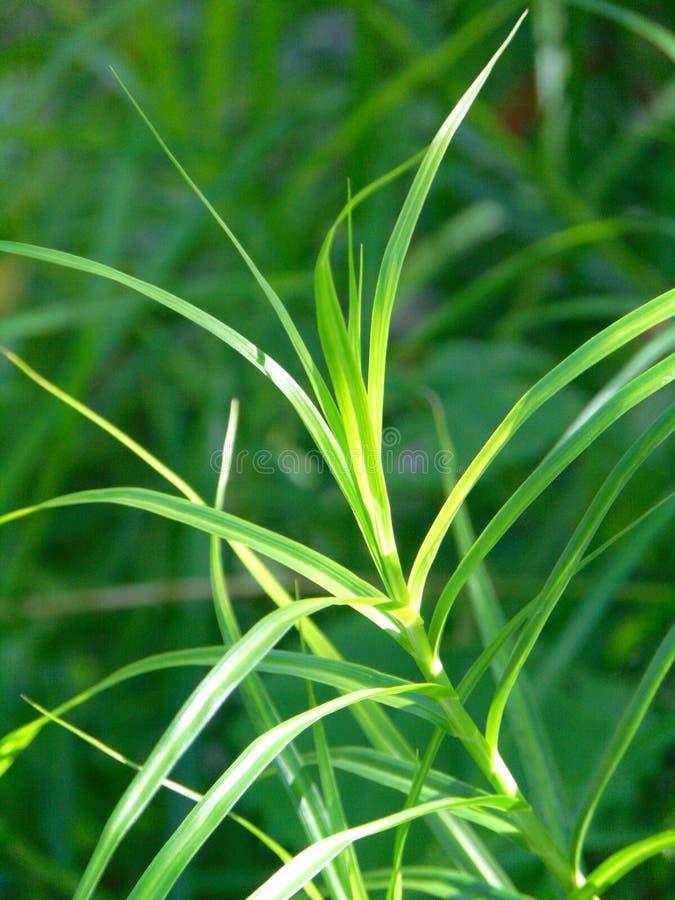 Фото макроса с декоративной текстурой предпосылки ярких ых-зелен заводов травы поля стоковые изображения
