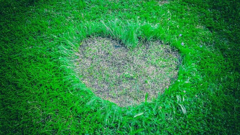 Форма сердца на предпосылке или знамени зеленой травы с открытым космосом для вашего текста стоковая фотография rf