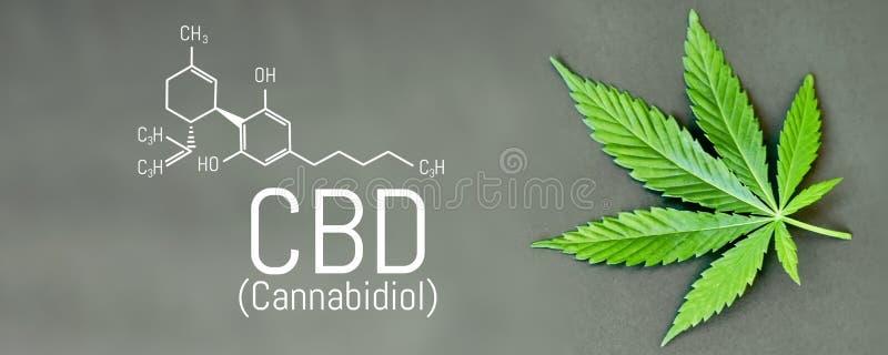 Формула конопли CBD Выдержка конопли масла CBD, медицинская концепция пеньки иллюстрация вектора