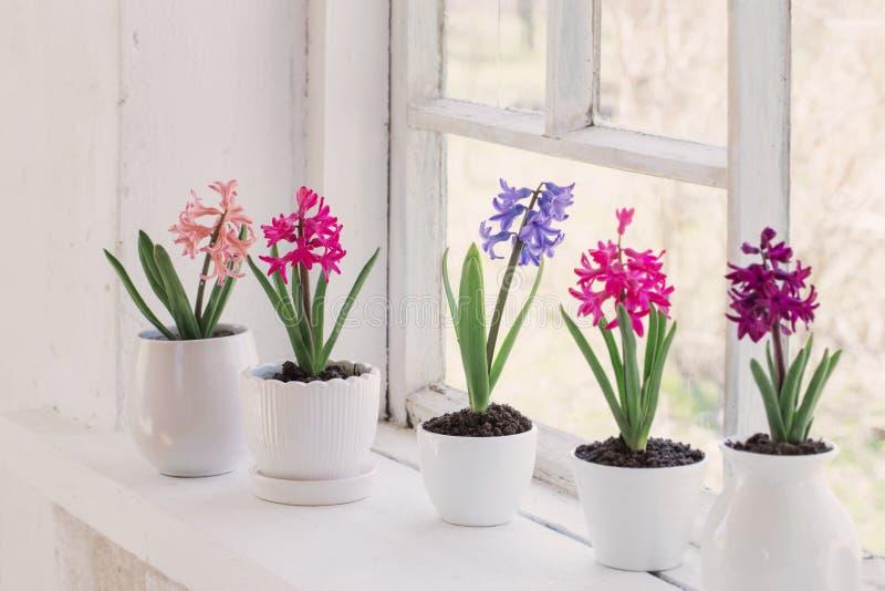Цветки весны на windowsill стоковые фотографии rf