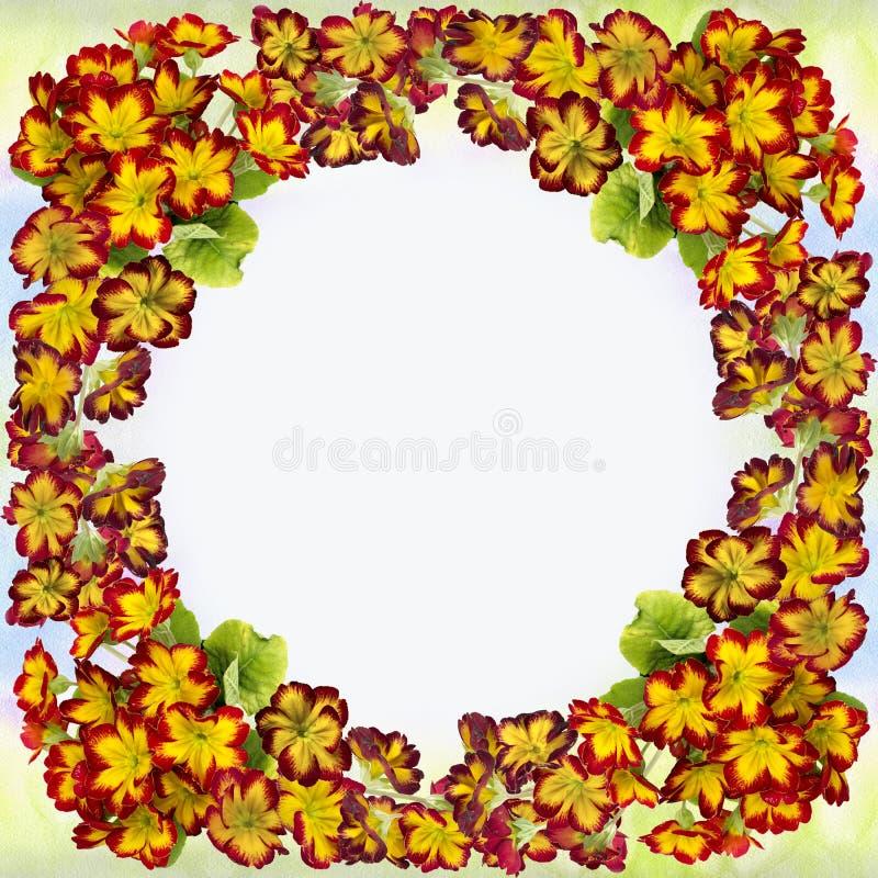 Цветки и листья первоцвета Декоративный состав на предпосылке акварели стоковые фотографии rf