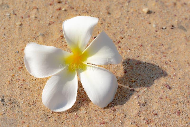 Цветки на песке стоковая фотография