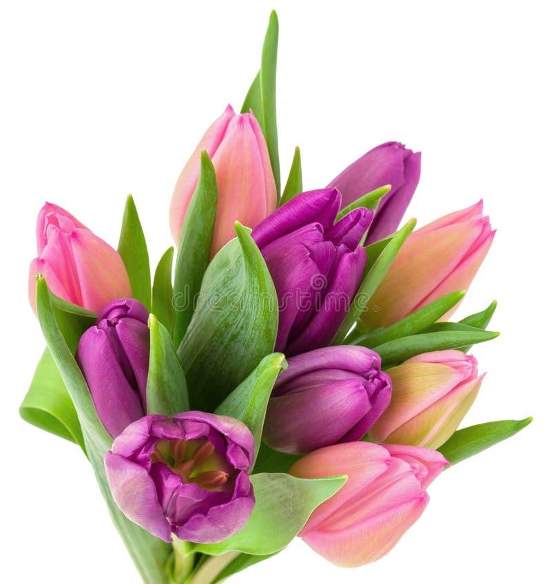 Цветки пурпур и пинк тюльпана с зелеными листьями изолированными на белой предпосылке, праздничном букете для пасхи или дне рожде стоковое изображение rf