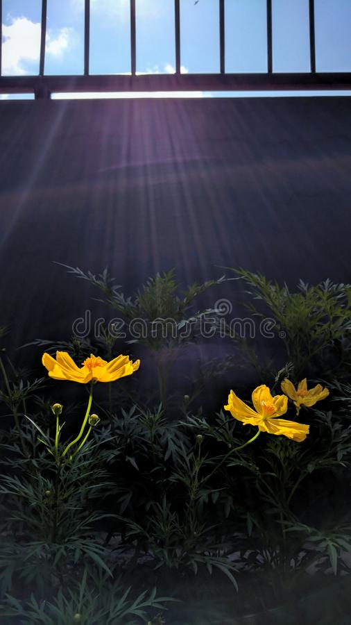 Цветок и стена стоковые изображения