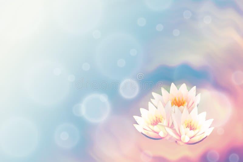 Цветок лотоса и запачкать абстрактную предпосылку иллюстрация вектора