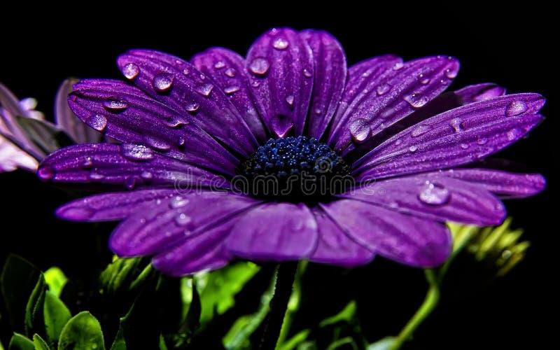 цветок royalty free stock images