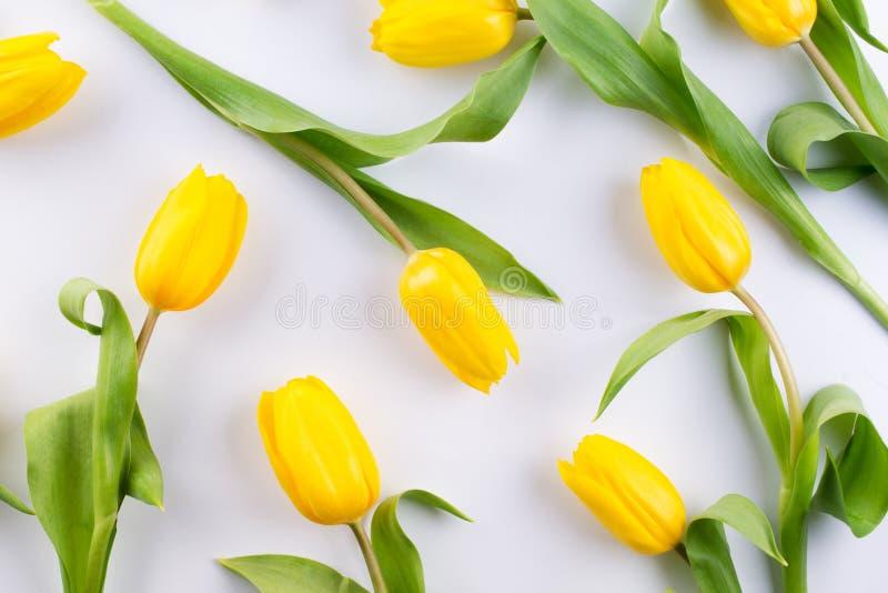 Цветочный узор сделанный желтого тюльпана на белой предпосылке Текстура картины цветков Плоское положение, стоковые фотографии rf