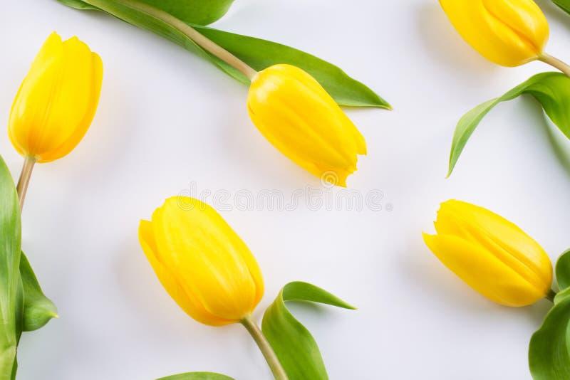Цветочный узор сделанный желтого тюльпана на белой предпосылке Текстура картины цветков Плоское положение, стоковые изображения rf