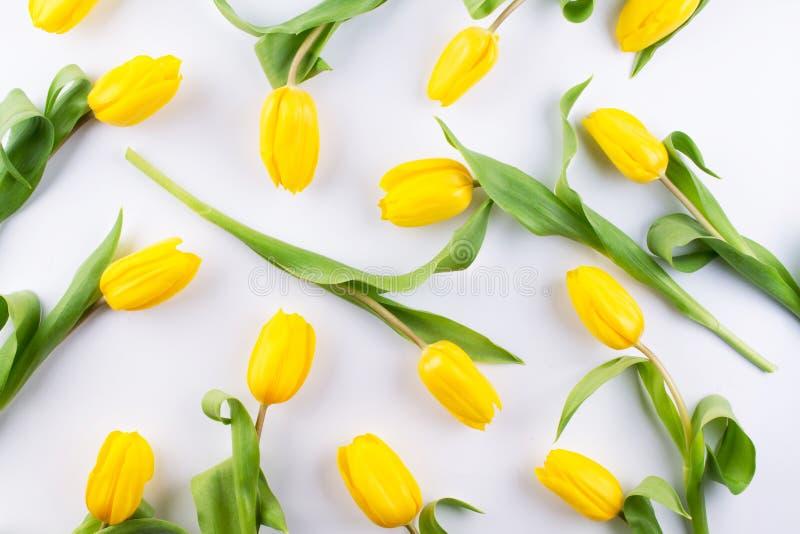 Цветочный узор сделанный желтого тюльпана на белой предпосылке Текстура картины цветков Плоское положение, стоковое фото