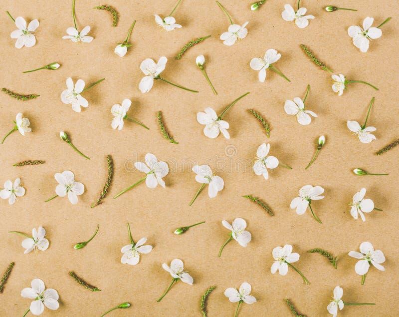 Цветочный узор сделанный из белых цветков и бутонов весны на предпосылке коричневой бумаги Плоское положение стоковое фото