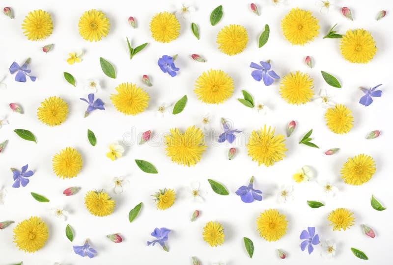Цветочный узор сделанный из желтого изолированных одуванчика, цветков сирени, розовых бутонов и листьев зеленого цвета на белой п стоковое изображение