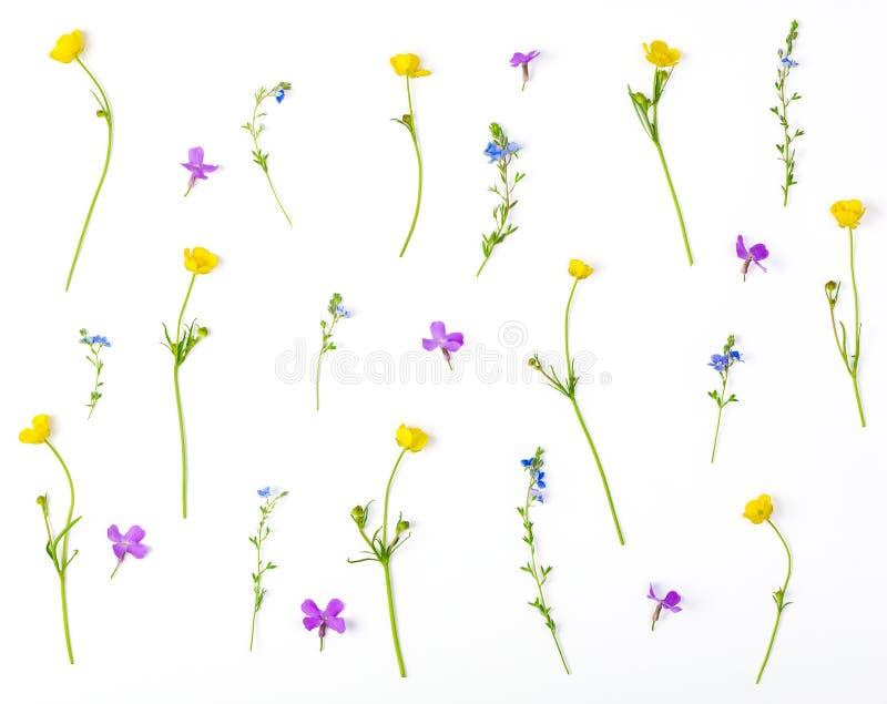 Цветочный узор сделанный из изолированных цветков луга на белой предпосылке Плоское положение стоковые фото