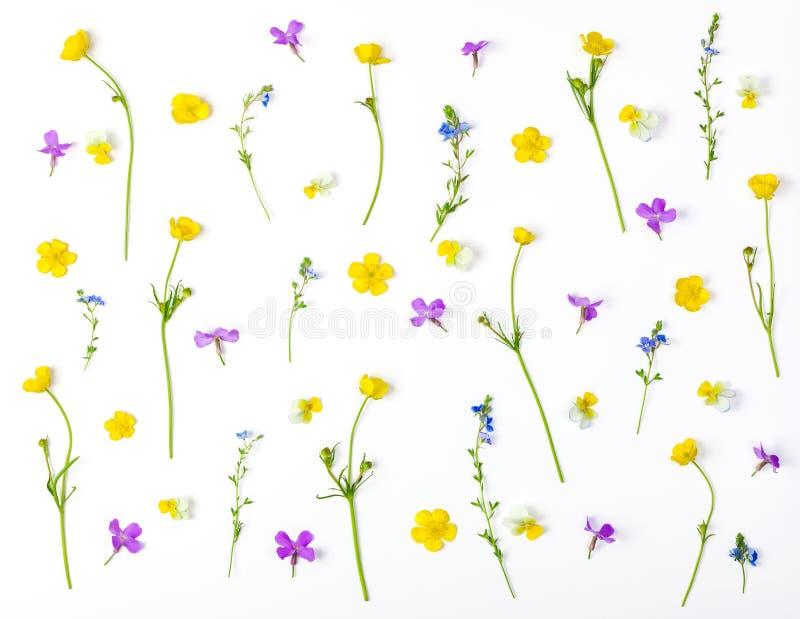 Цветочный узор сделанный из изолированных цветков луга на белой предпосылке Плоское положение стоковые фотографии rf