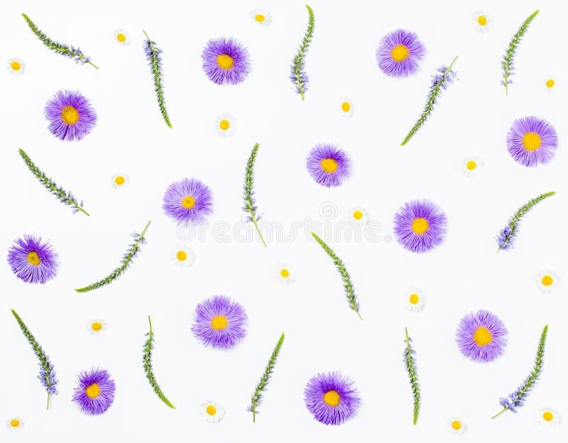 Цветочный узор сделанный цветков veronica, фиолетовой астры и стоцвета на белой предпосылке Плоское положение стоковое изображение