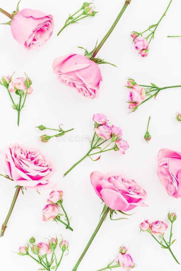 Цветочный узор с изолированными цветками роз на белой предпосылке Плоское положение, взгляд сверху сердце подарка дня принципиаль стоковая фотография
