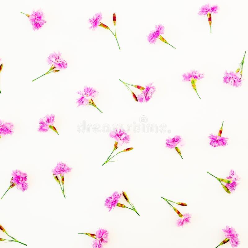 Цветочный узор с розовыми цветками на белой предпосылке Плоское положение, взгляд сверху Цветет концепция стоковая фотография rf