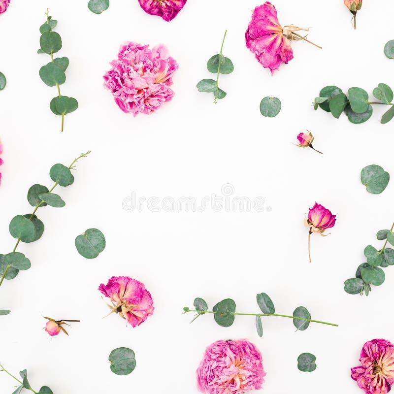 Цветочный узор розовых цветков и ветвей эвкалипта на белой предпосылке Плоское положение, взгляд сверху стоковые фото