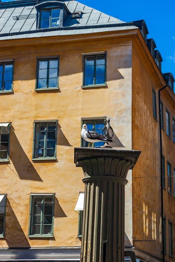 Чайка сидя на классическом средневековом столбце с живым желтым оранжевым строя фасадом на предпосылке в Стокгольме, Швеции стоковые фото