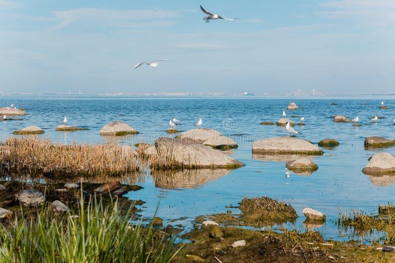 Чайки летают и сидят на камнях стоковое изображение