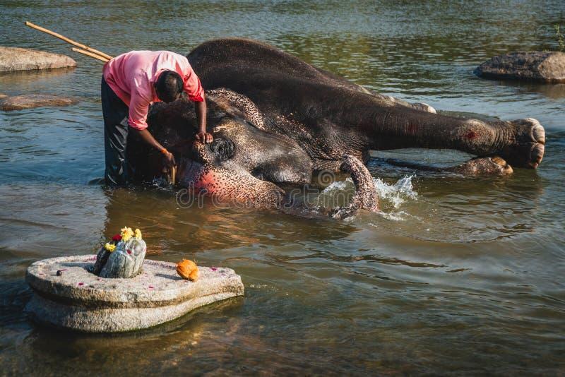 Человек моет его ванну слона на реке в hampi Индии стоковое фото rf