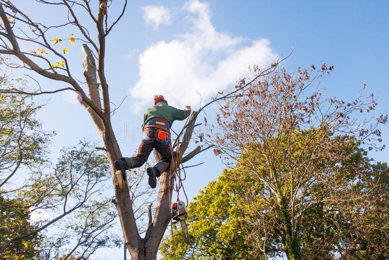 Человек на 2 стволах дерева стоковые фотографии rf