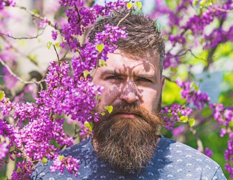 Человек с бородой и усик на строгой стороне около цветков на солнечный день Концепция парфюмерии Битник наслаждается весной близк стоковые изображения